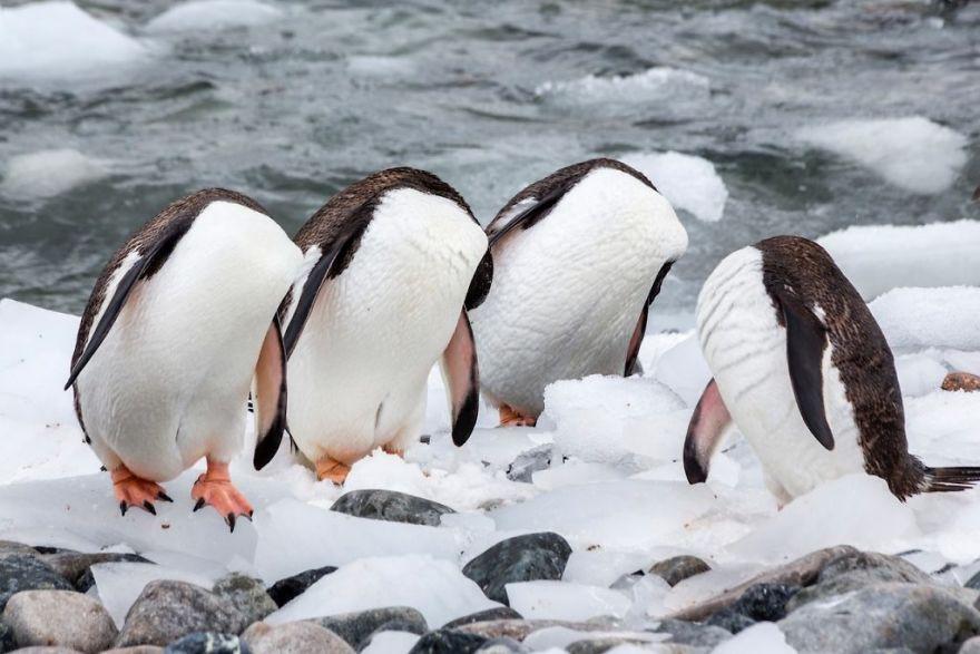 19 con vật tội nghiệp bị chụp ảnh dìm hàng đúng lúc đang không ăn hình - Ảnh 15.