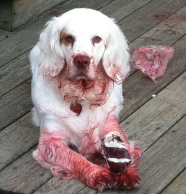 Bản mặt câng câng của 14 chú chó sau khi bị bắt quả tang bôi son trát phấn trộm của chủ - Ảnh 22.