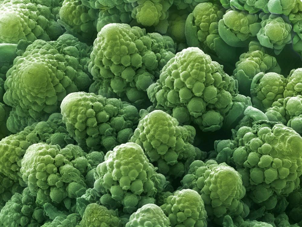 Ai cũng từng nhìn, ăn các thứ này nhưng mấy ai biết dưới kính hiển vi chúng đáng sợ như thế nào - Ảnh 4.