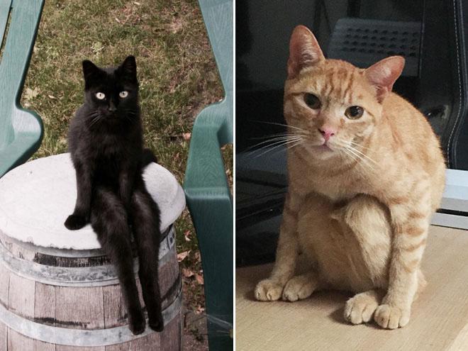 20 dáng ngồi phong thái hoàng thượng của các boss mèo - Ảnh 15.