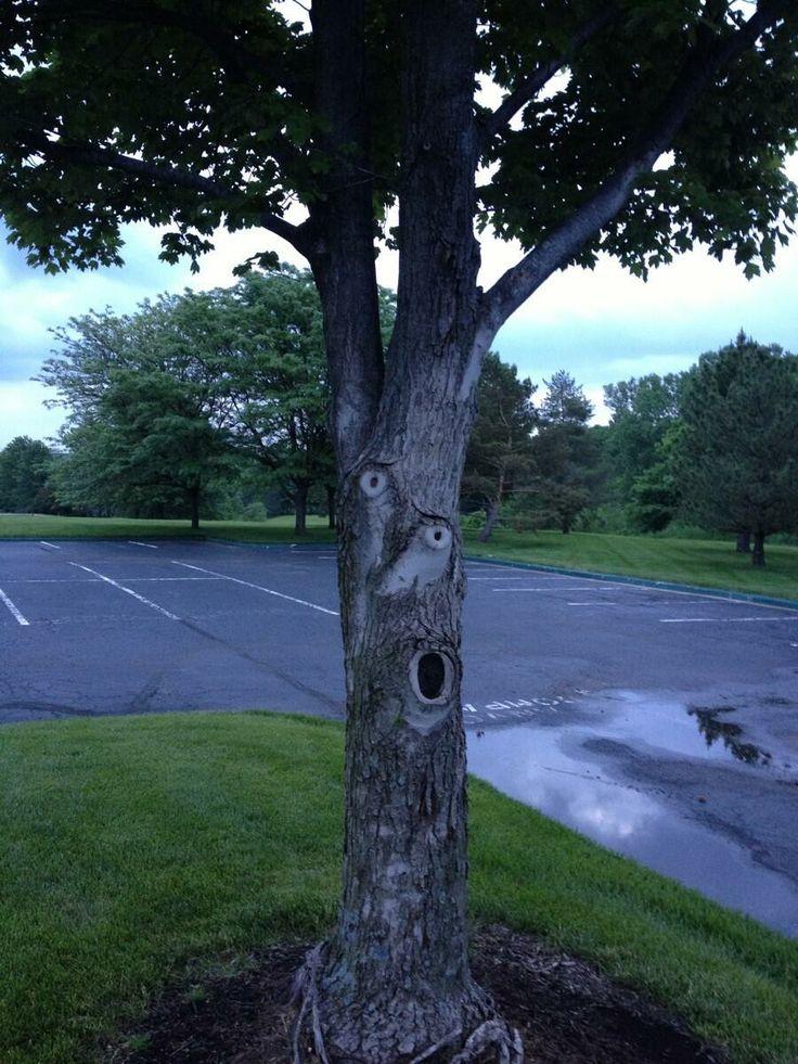 16 gương mặt ma quái tình cờ mọc trên những thân cây vô tri, vô giác - Ảnh 21.