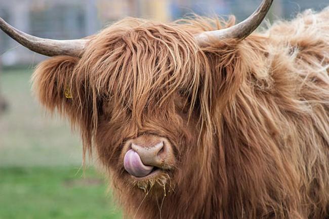 Chiêm ngưỡng 17 loài vật sở hữu bộ lông đặc biệt nhất trần đời - Ảnh 29.