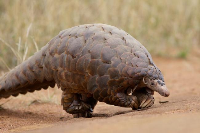 13 loài động vật kỳ bí không ai nghĩ là có thực trên đời - Ảnh 23.