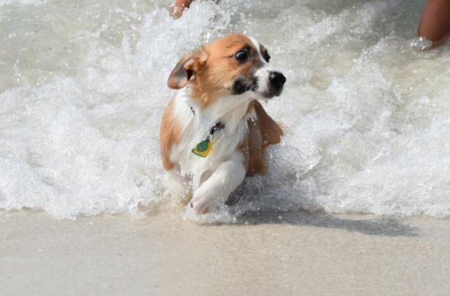 21 chú chó dù to xác nhưng lại có tâm hồn mong manh dễ vỡ - Ảnh 31.