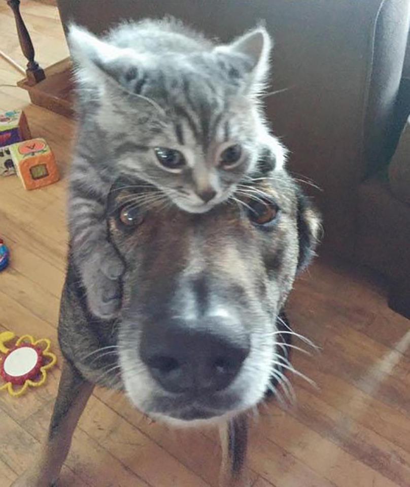 Khuôn mặt đáng thương của 14 chú chó bị những con mèo đanh đá bắt nạt - Ảnh 27.