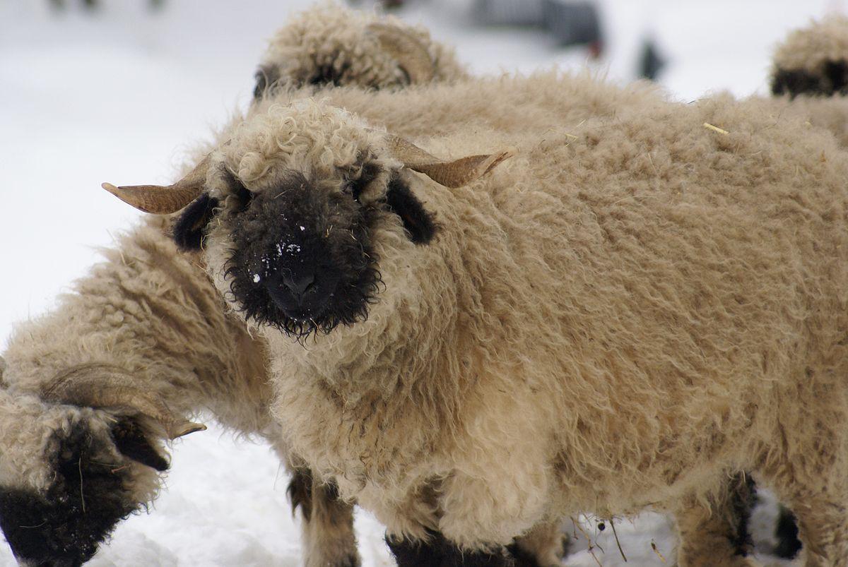 Chiêm ngưỡng 17 loài vật sở hữu bộ lông đặc biệt nhất trần đời - Ảnh 31.