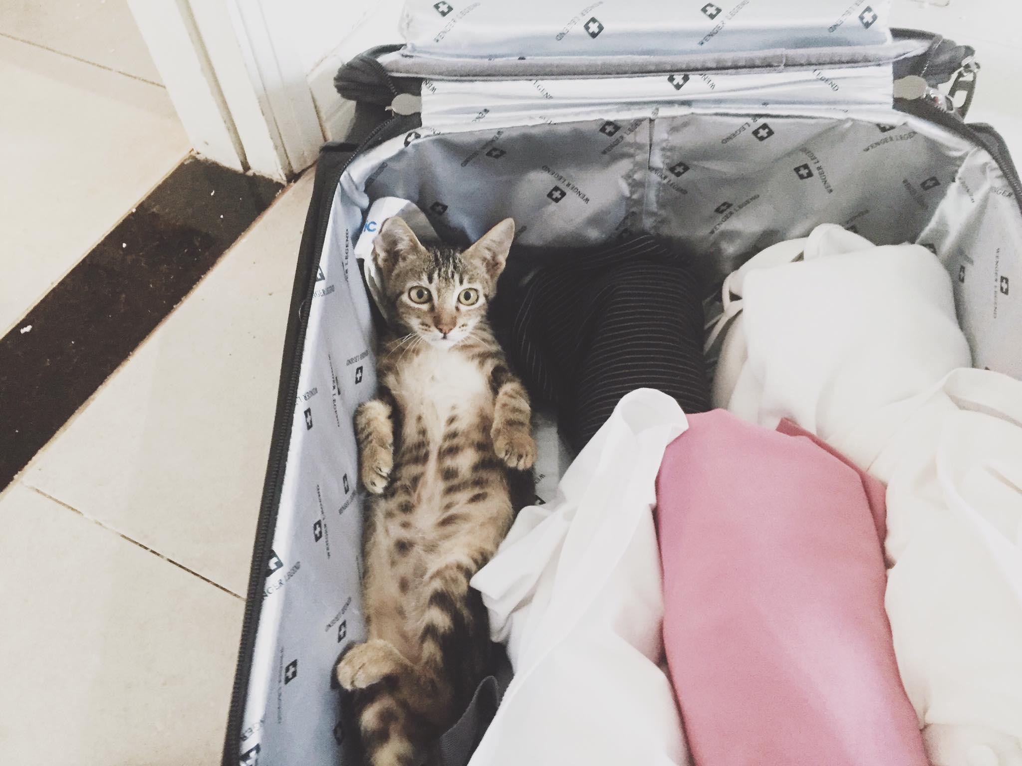 Check ngay tính cách mèo nhà bạn để hiểu vì sao chúng có sở thích khác thường đến vậy - Ảnh 1.