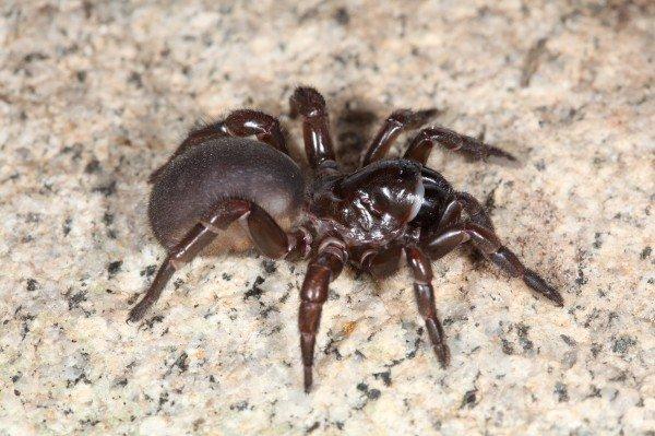Loài nhện còn một khả năng cực kỳ kinh dị mà đến bây giờ khoa học mới phát hiện ra - Ảnh 3.