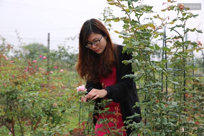 Cô gái trẻ sở hữu khu vườn 5.000m2 với hàng nghìn hoa hồng quý hiếm, đắt đỏ tại Hà Nội - Ảnh 11.
