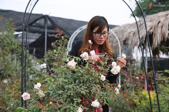 Cô gái trẻ sở hữu khu vườn 5.000m2 với hàng nghìn hoa hồng quý hiếm, đắt đỏ tại Hà Nội - Ảnh 10.