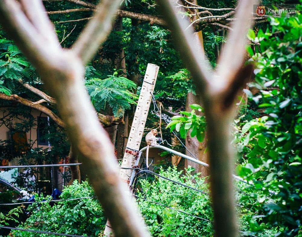 Chùm ảnh: Chuyện về đàn khỉ đuôi dài nương náu trong ngôi chùa ở Vũng Tàu, sống nhờ thức ăn của du khách - Ảnh 11.