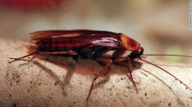 Không phải gián hay chuột, đây mới là sinh vật duy nhất sống sót khi Trái đất bị hủy diệt - Ảnh 1.