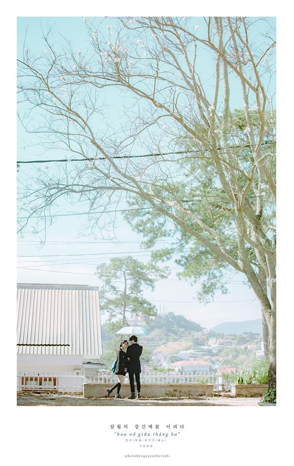 Không phải Nhật Bản đâu, bạn đang xem ảnh hoa ban trắng tuyệt đẹp ở Đà Lạt đấy! - Ảnh 14.
