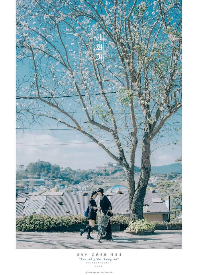 Không phải Nhật Bản đâu, bạn đang xem ảnh hoa ban trắng tuyệt đẹp ở Đà Lạt đấy! - Ảnh 13.