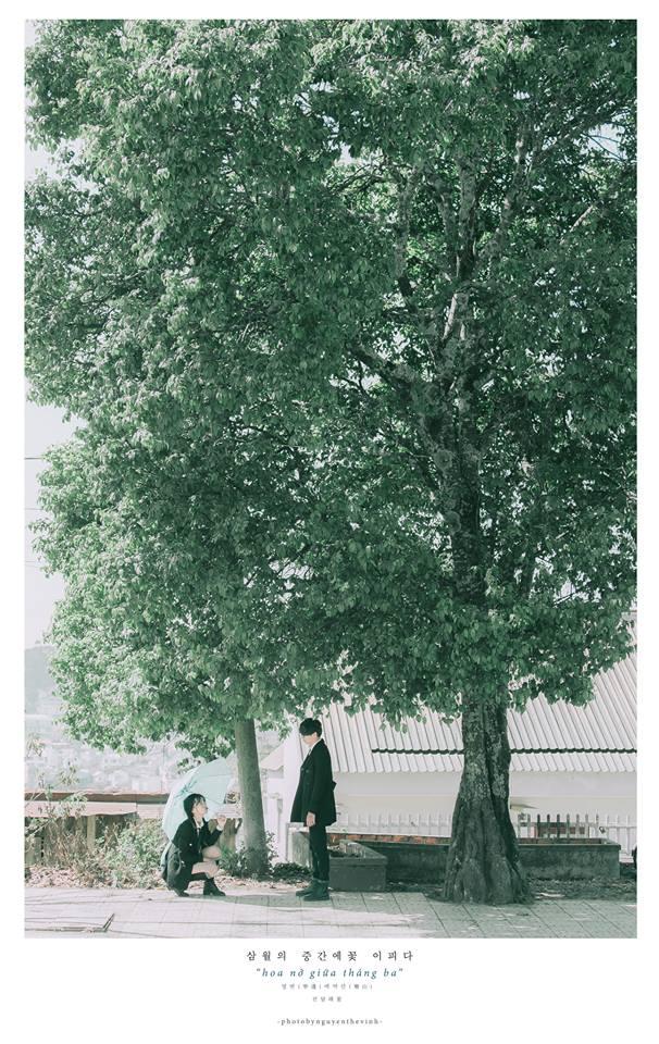 Không phải Nhật Bản đâu, bạn đang xem ảnh hoa ban trắng tuyệt đẹp ở Đà Lạt đấy! - Ảnh 10.