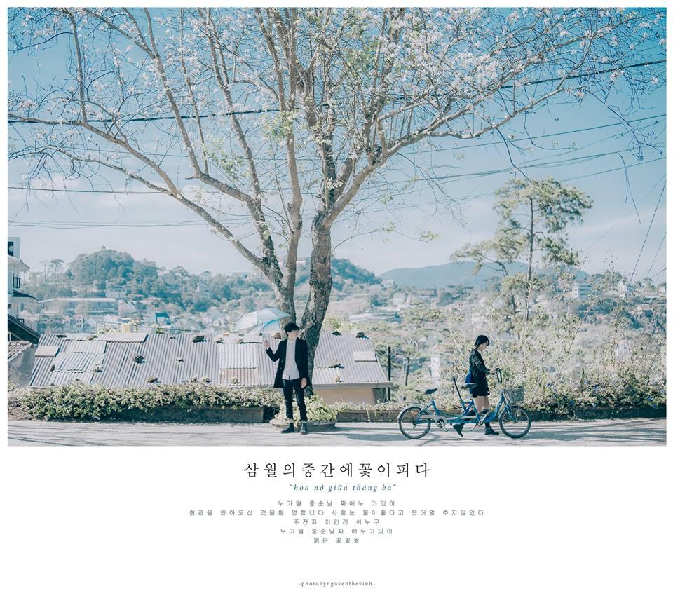 Không phải Nhật Bản đâu, bạn đang xem ảnh hoa ban trắng tuyệt đẹp ở Đà Lạt đấy! - Ảnh 8.