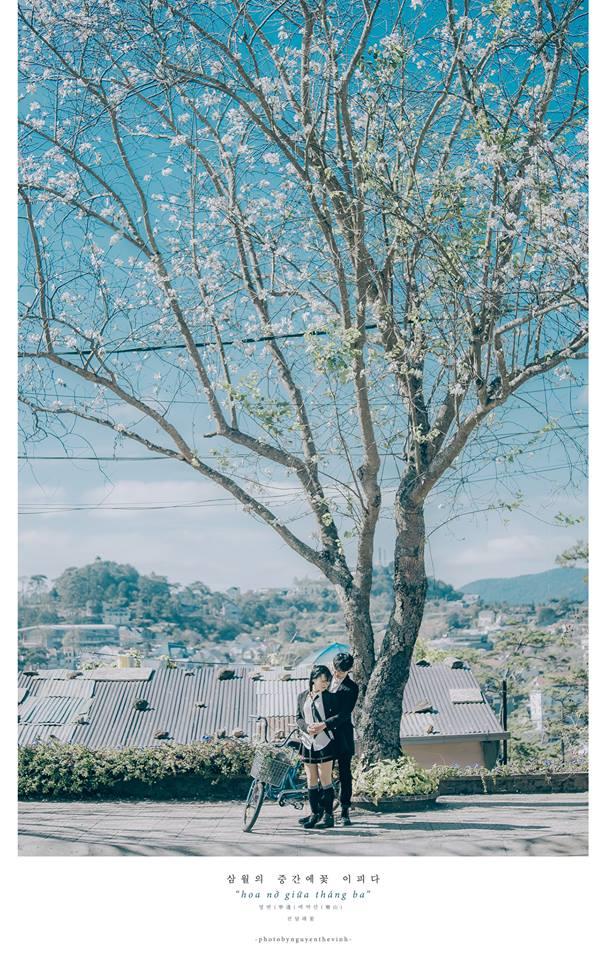 Không phải Nhật Bản đâu, bạn đang xem ảnh hoa ban trắng tuyệt đẹp ở Đà Lạt đấy! - Ảnh 4.