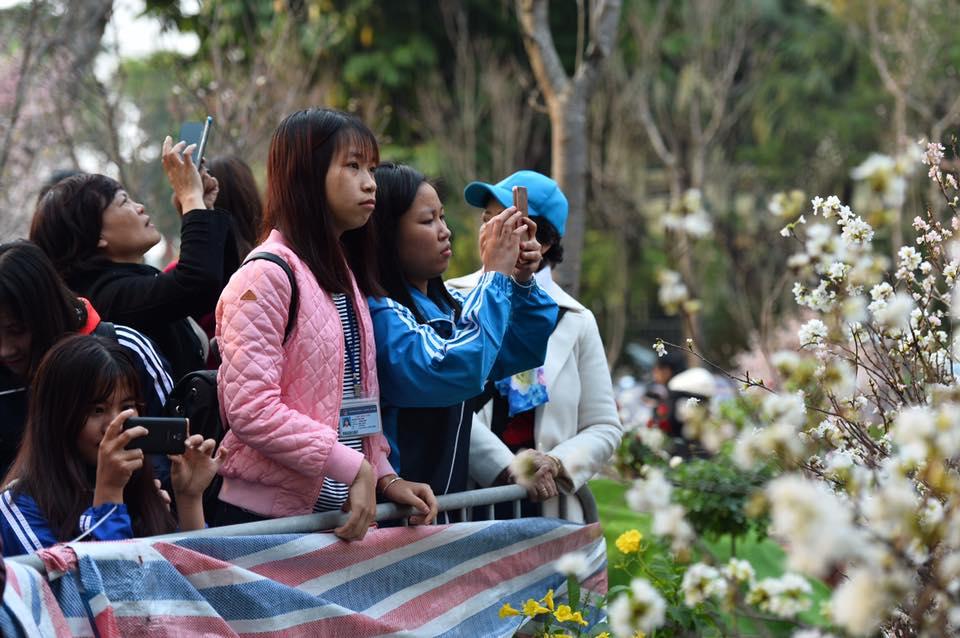 Người dân Hà Nội háo hức chụp ảnh với hoa anh đào từ ngoài hàng rào - Ảnh 4.