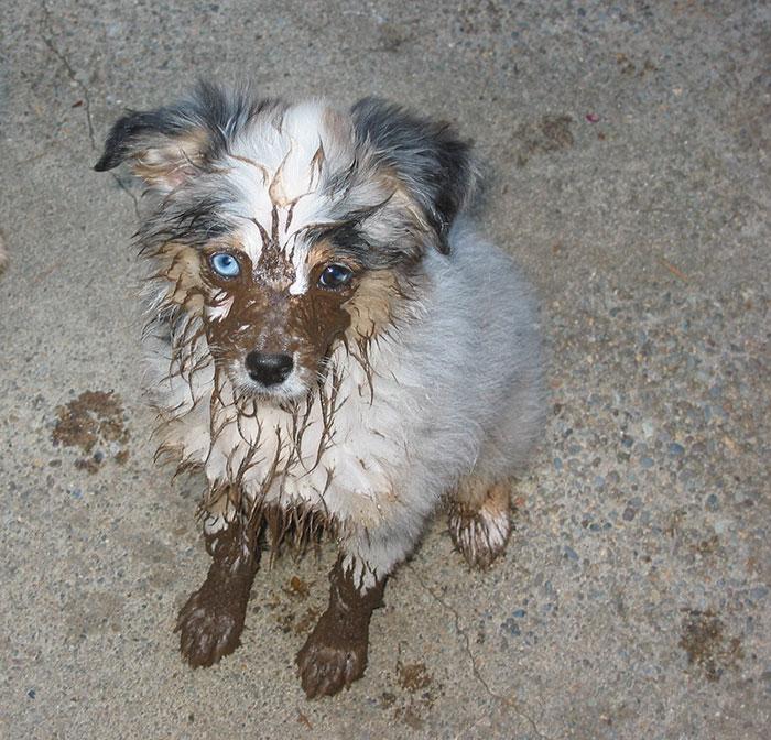16 chú chó không dùng bột giặt nhưng cũng chẳng ngại gì vết bẩn - Ảnh 29.