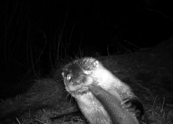 Đặt máy quay lén động vật, thợ săn bất ngờ khi thấy những hành vi kỳ lạ của chúng - Ảnh 21.