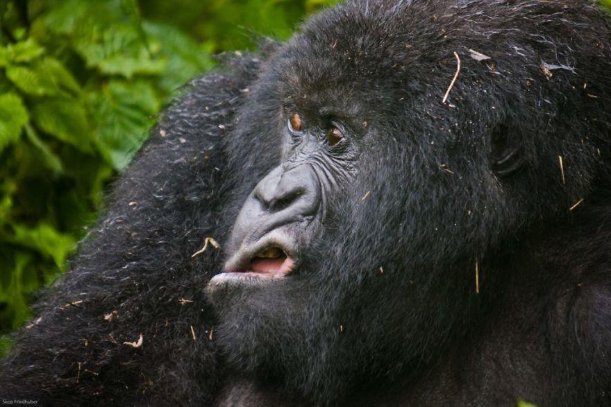 19 con vật tội nghiệp bị chụp ảnh dìm hàng đúng lúc đang không ăn hình - Ảnh 21.
