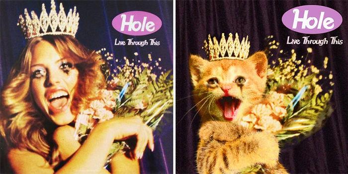 Thay đám mèo cute vào hình ca sĩ trên bìa album, cuối cùng hiệu ứng từ chúng còn hiệu quả hơn bản gốc - Ảnh 19.