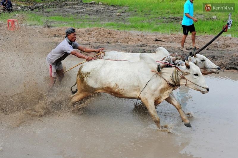 Chùm ảnh: Những pha té ngã không thương tiếc trên đường đua bò vùng Bảy Núi - Ảnh 5.