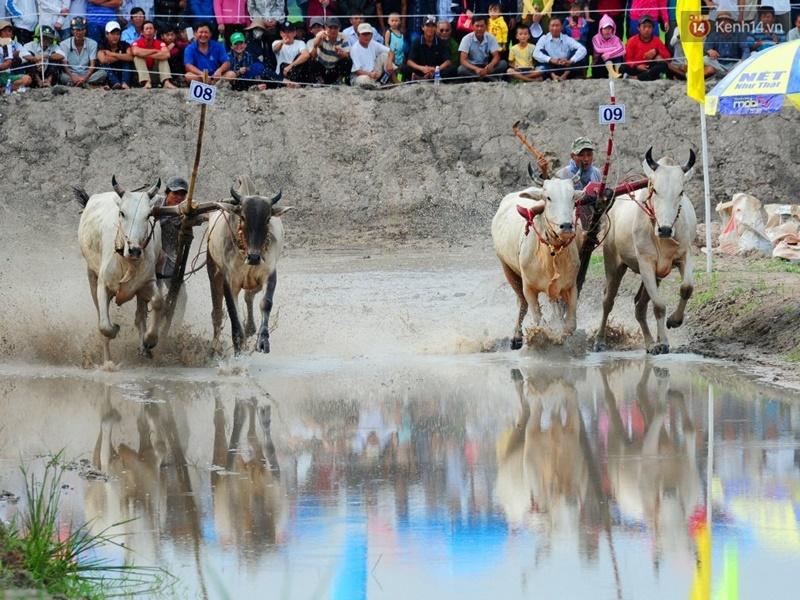 Chùm ảnh: Những pha té ngã không thương tiếc trên đường đua bò vùng Bảy Núi - Ảnh 4.