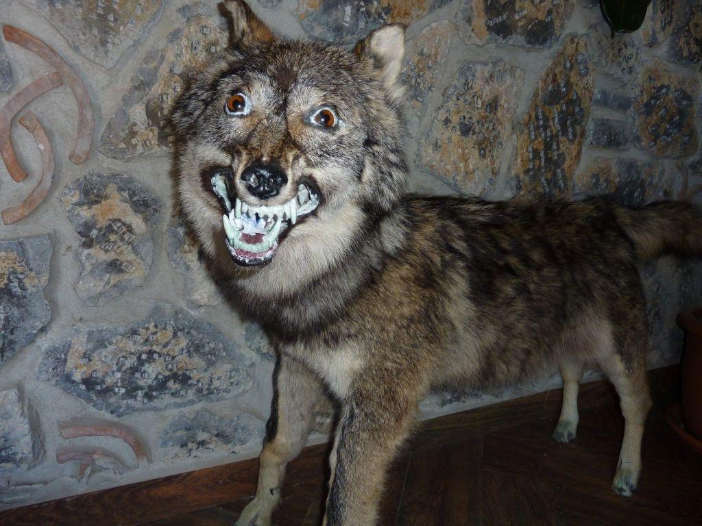 Những xác thú nhồi bông mặt ngáo khiến bạn nhìn phát là cười như ma làm - Ảnh 17.