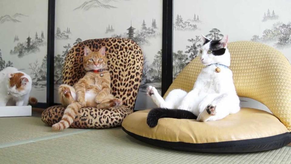 20 dáng ngồi phong thái hoàng thượng của các boss mèo - Ảnh 21.