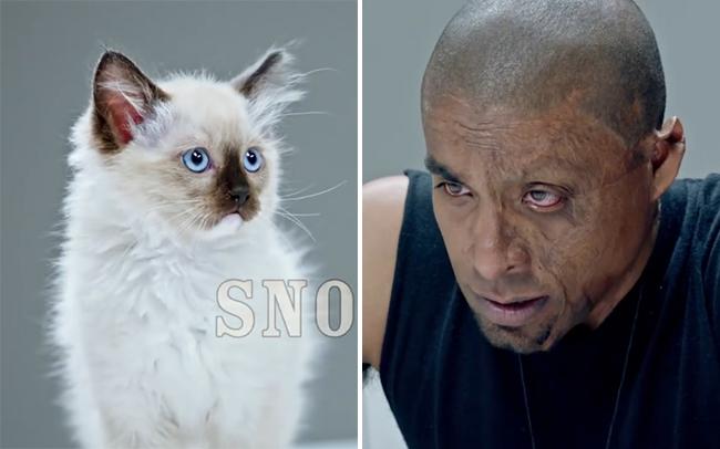 Xã hội đen thi lườm nhau không chớp mắt với mèo, cuối cùng, mèo thắng tuyệt đối - Ảnh 3.