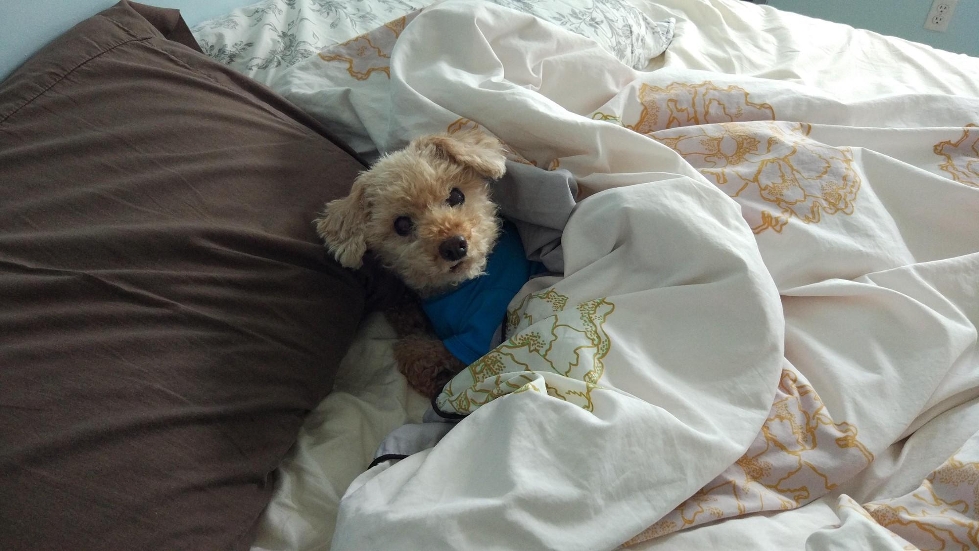 15 chú chó xấu tính chỉ thích độc chiếm một mình một giường mới chịu - Ảnh 13.