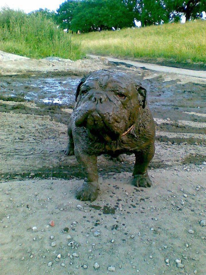16 chú chó không dùng bột giặt nhưng cũng chẳng ngại gì vết bẩn - Ảnh 15.