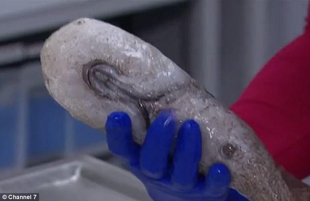 Những sinh vật kỳ dị mới được tìm thấy ở đáy đại dương sâu thẳm - Ảnh 2.
