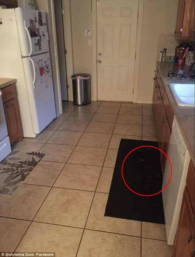 Rõ ràng có chú chó nấp trong căn bếp nhưng người ta không tài nào tìm ra nổi - Ảnh 2.