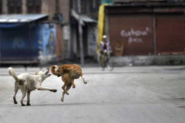 Xử lý chó hoang trên thế giới: Nơi đánh đập, đầu độc, chỗ đưa chó hoang về trung tâm bảo trợ để chờ nhận nuôi - Ảnh 3.