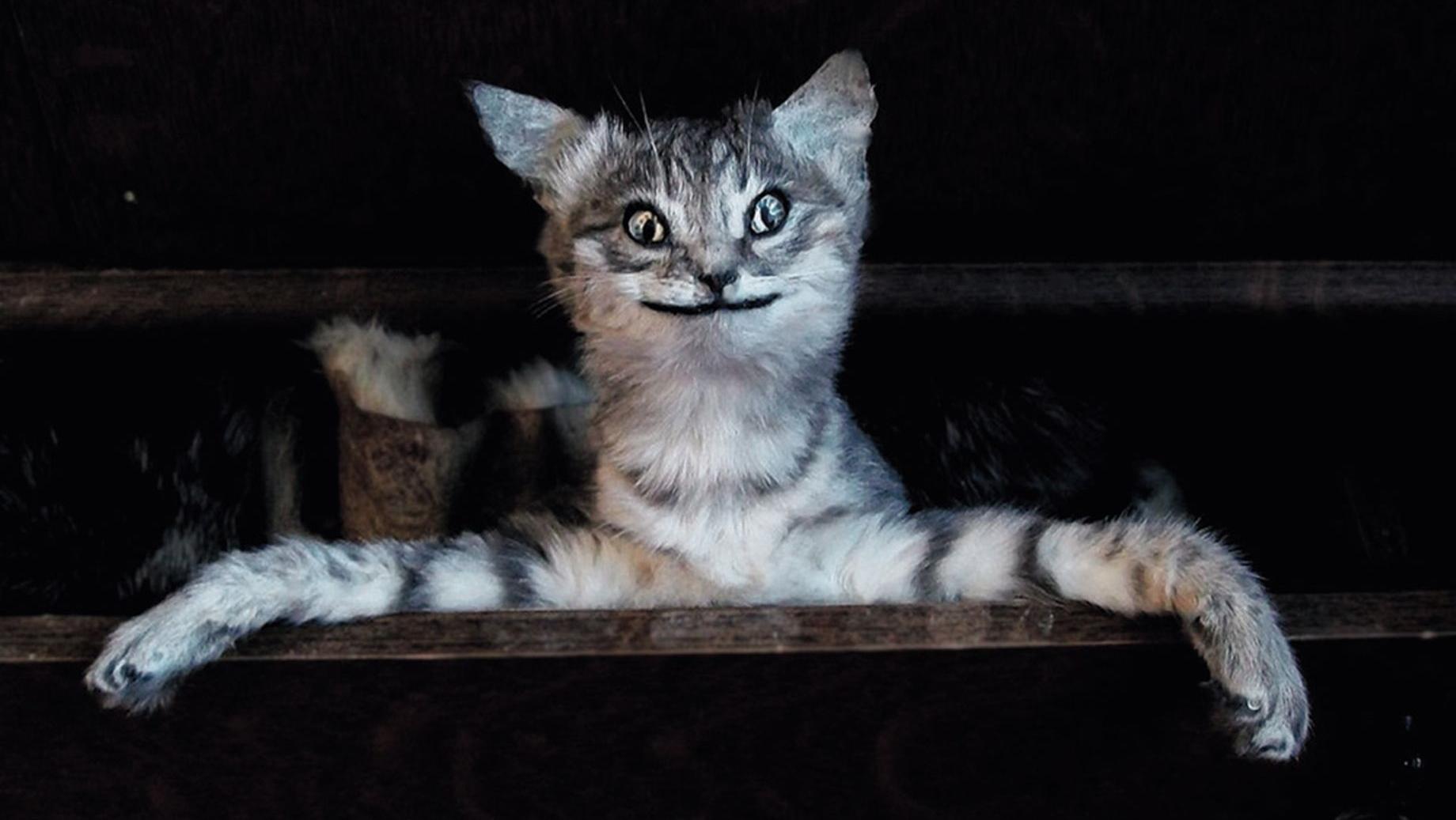 Những xác thú nhồi bông mặt ngáo khiến bạn nhìn phát là cười như ma làm - Ảnh 19.