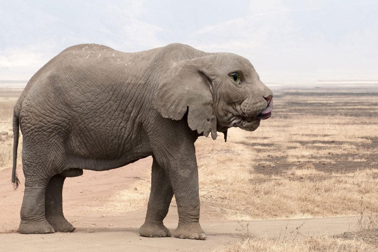 Những loài vật mới chỉ xuất hiện gần đây trong thời đại photoshop - Ảnh 33.