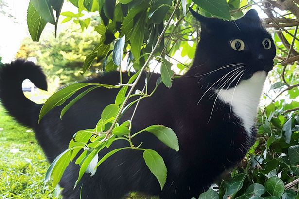 Chết cười với boss chẳng ăn cỏ mèo mà lúc nào mặt cũng đơ như cây cơ - Ảnh 1.