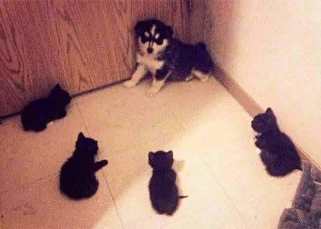 Khuôn mặt đáng thương của 14 chú chó bị những con mèo đanh đá bắt nạt - Ảnh 3.
