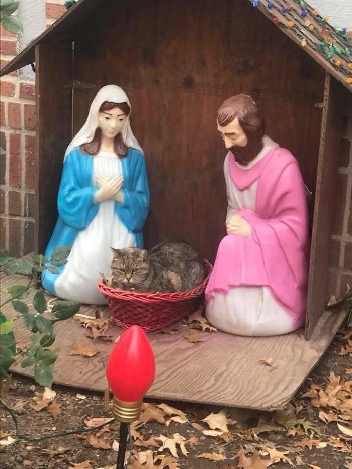 Chú mèo chễm chệ ngồi lên bàn thờ, đã thế mặt lại còn sưng sỉa - Ảnh 1.