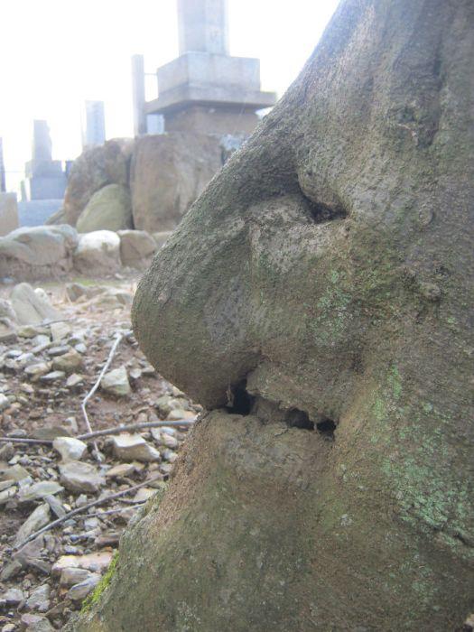 16 gương mặt ma quái tình cờ mọc trên những thân cây vô tri, vô giác - Ảnh 25.