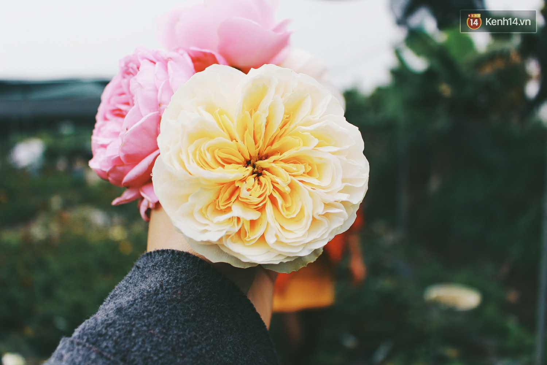 Cô gái trẻ sở hữu khu vườn 5.000m2 với hàng nghìn hoa hồng quý hiếm, đắt đỏ tại Hà Nội - Ảnh 5.