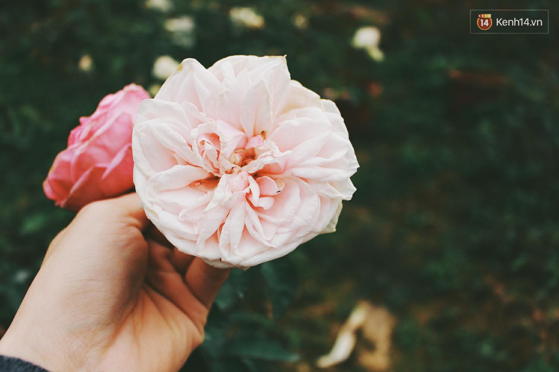 Cô gái trẻ sở hữu khu vườn 5.000m2 với hàng nghìn hoa hồng quý hiếm, đắt đỏ tại Hà Nội - Ảnh 12.