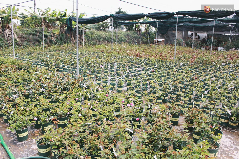 Cô gái trẻ sở hữu khu vườn 5.000m2 với hàng nghìn hoa hồng quý hiếm, đắt đỏ tại Hà Nội - Ảnh 2.