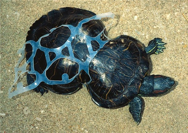 Cả tuần nay sinh vật chết hàng loạt - cảnh báo môi trường đến mức báo động rồi - Ảnh 4.