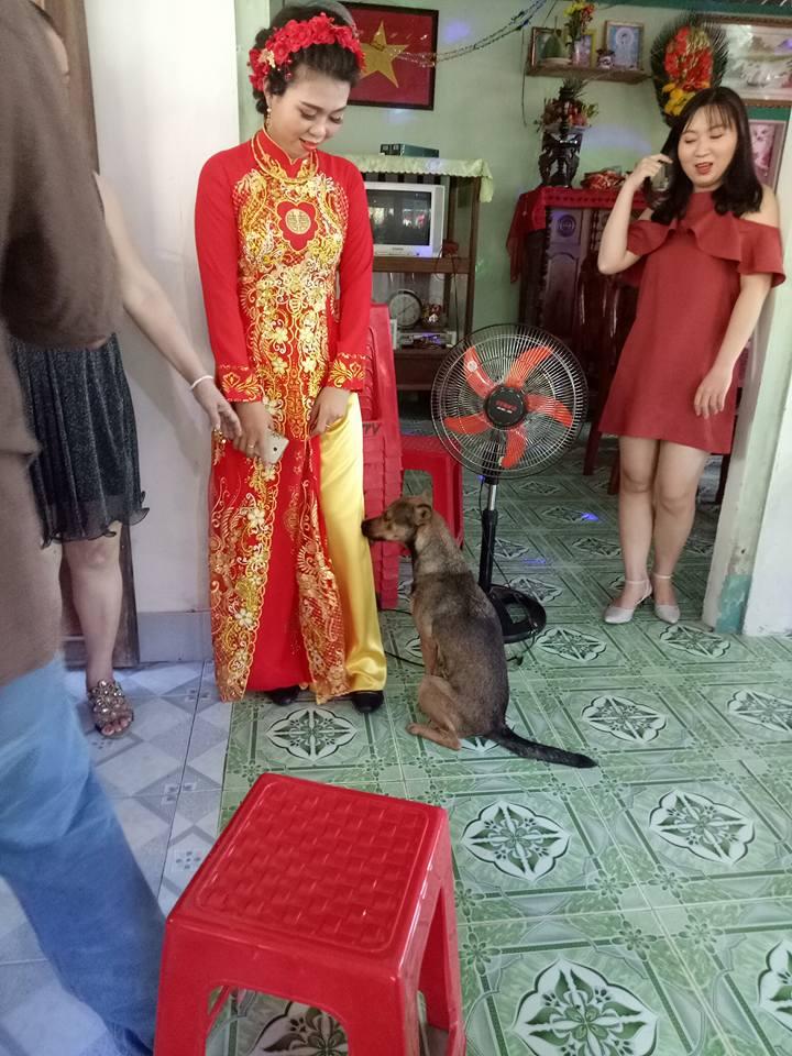 Xúc động hình ảnh chú chó quấn chân, không muốn rời xa trong ngày cô chủ đi lấy chồng - Ảnh 4.