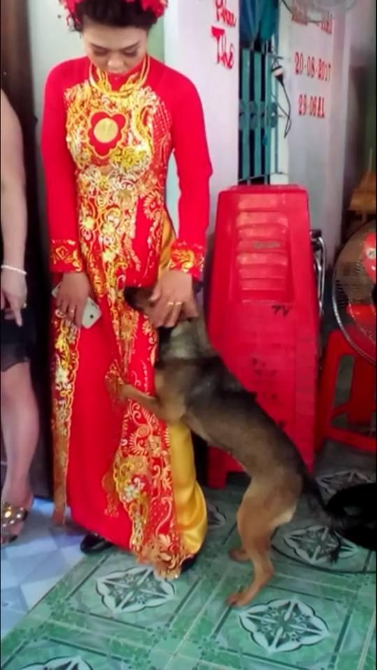 Xúc động hình ảnh chú chó quấn chân, không muốn rời xa trong ngày cô chủ đi lấy chồng - Ảnh 3.