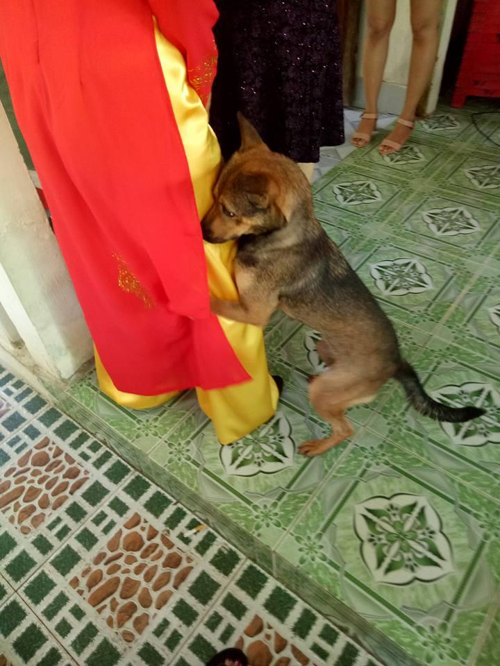 Xúc động hình ảnh chú chó quấn chân, không muốn rời xa trong ngày cô chủ đi lấy chồng - Ảnh 5.