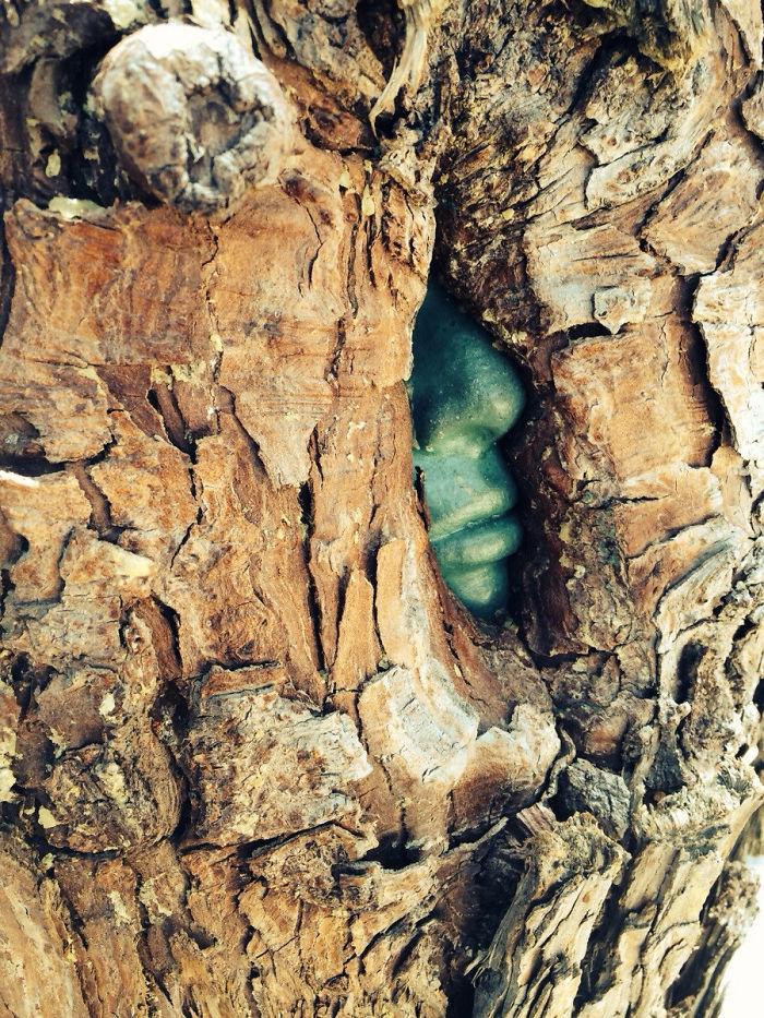 Sức sống mãnh liệt bất diệt của 22 chiến binh cây xanh - Ảnh 27.